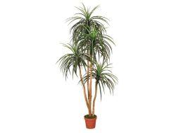 Kunstplanten Nolina 185cm