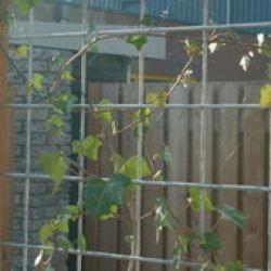 Concrete reinforcement mesh hot dip galvanized 2x3m 8/100mm