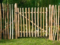 Chestnut paling fencing gate