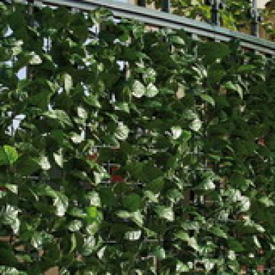 Kunsthaag tuinscherm hedera klimop 150x300cm